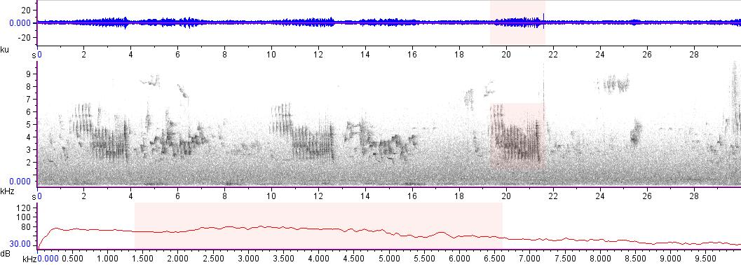 Sonogram of recording #AV 18187