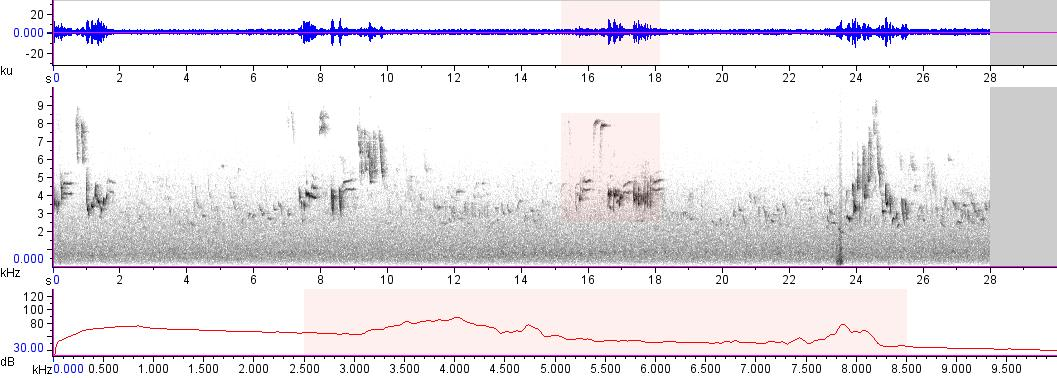 Sonogram of recording #AV 18188