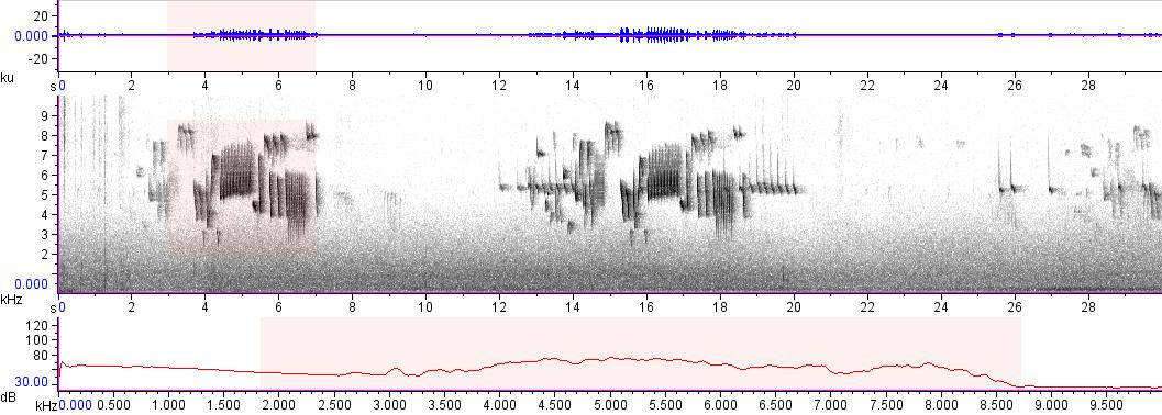 Sonogram of recording #AV 18217