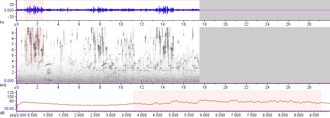 Sonogram of recording #AV 18248
