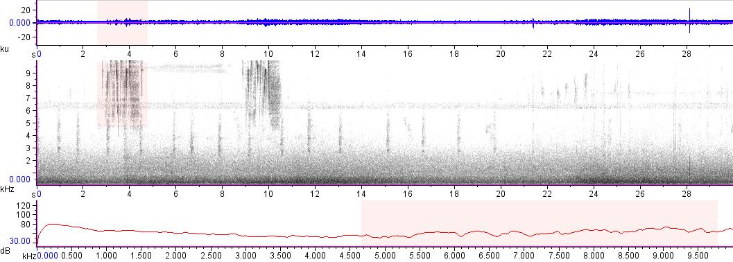 Sonogram of recording #AV 18268
