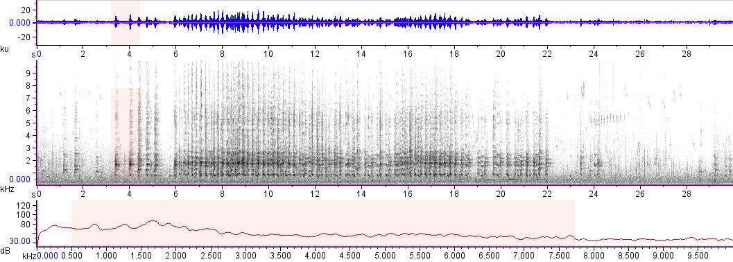 Sonogram of recording #AV 18324