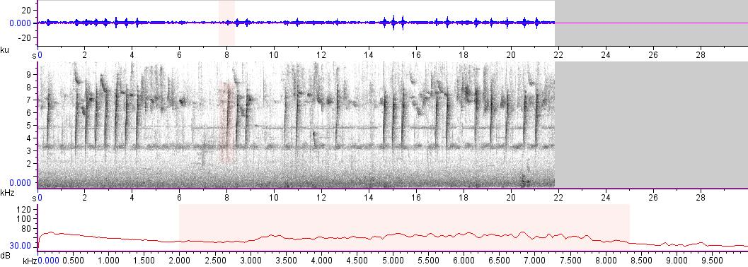 Sonogram of recording #AV 18373