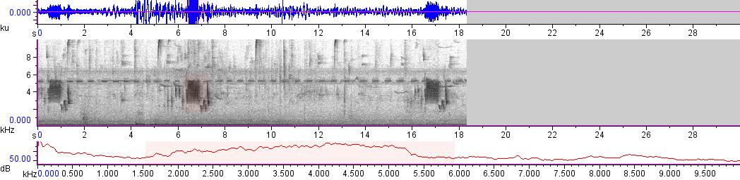 Sonogram of recording #AV 18475