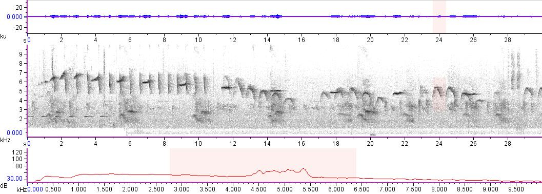Sonogram of recording #AV 18536