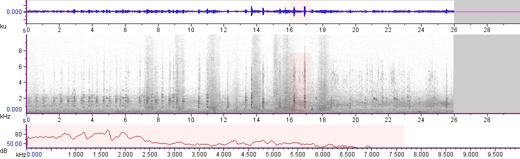 Sonogram of recording #AV 18562