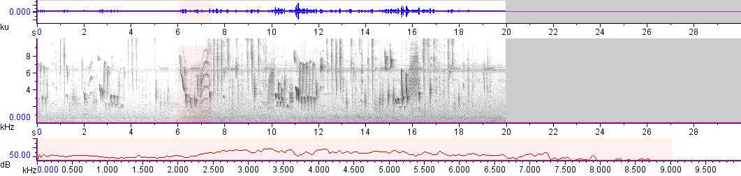 Sonogram of recording #AV 18612