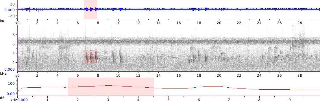 Sonogram of recording #AV 18628