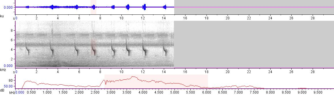 Sonogram of recording #AV 18654
