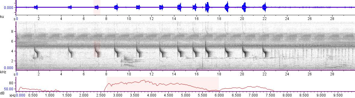Sonogram of recording #AV 18656