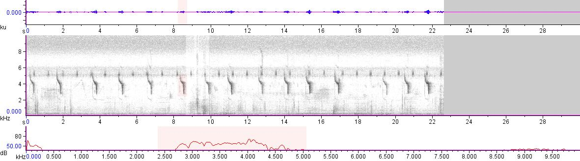 Sonogram of recording #AV 18660