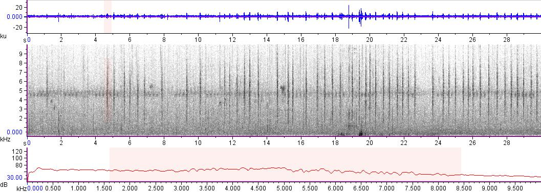 Sonogram of recording #AV 18709