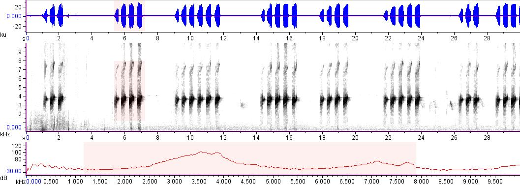Sonogram of recording #AV 18736