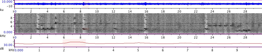 Sonogram of recording #AV 18758