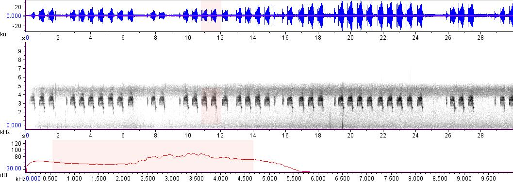 Sonogram of recording #AV 18767
