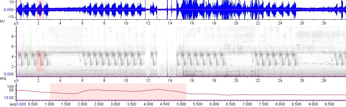 Sonogram of recording #AV 18834
