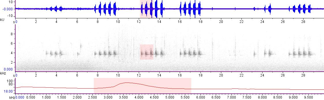 Sonogram of recording #AV 18835