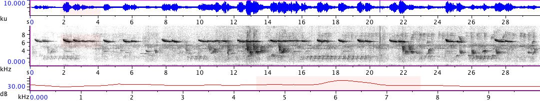 Sonogram of recording #AV 18841