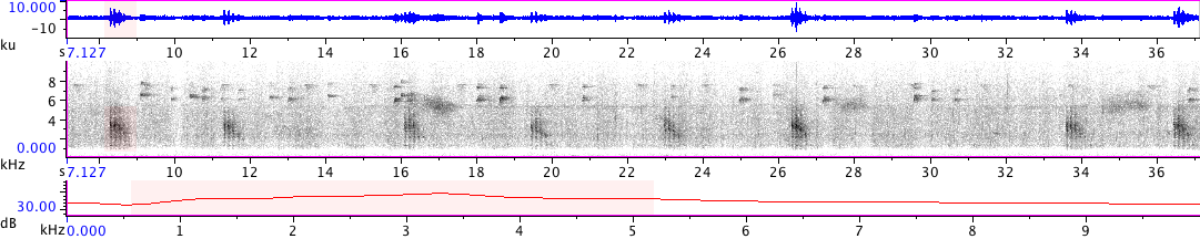 Sonogram of recording #AV 18843