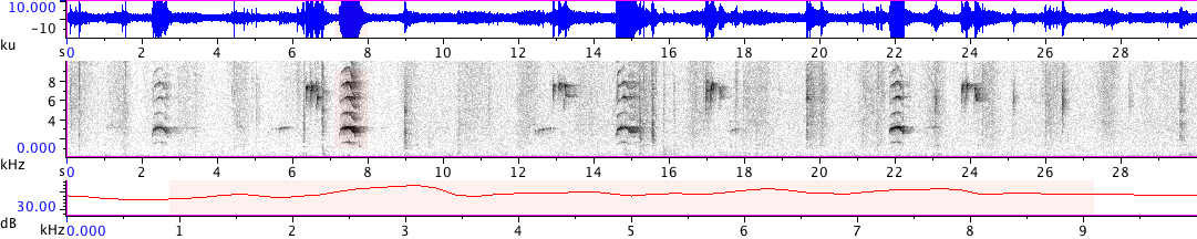 Sonogram of recording #AV 18849