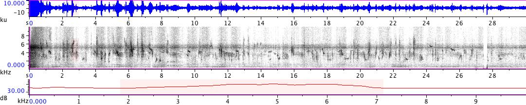 Sonogram of recording #AV 18857