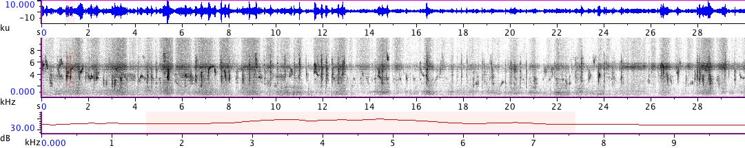Sonogram of recording #AV 18858