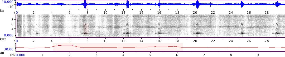 Sonogram of recording #AV 18872