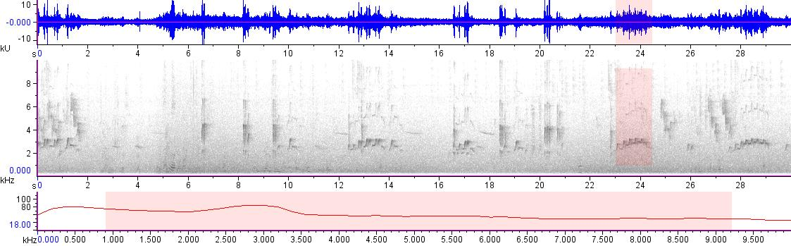 Sonogram of recording #AV 18902