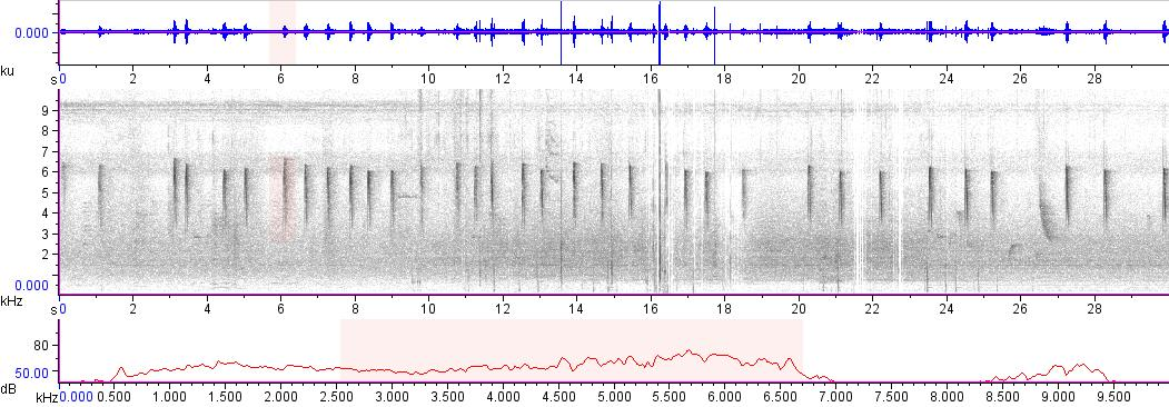 Sonogram of recording #AV 18999