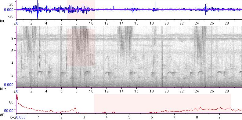 Sonogram of recording #AV 19015
