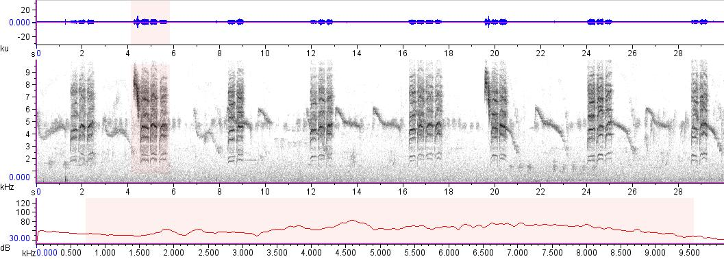 Sonogram of recording #AV 19070