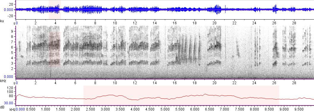 Sonogram of recording #AV 19154