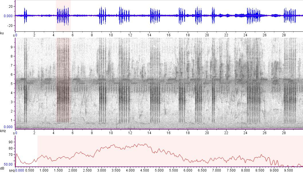 Sonogram of recording #AV 19719