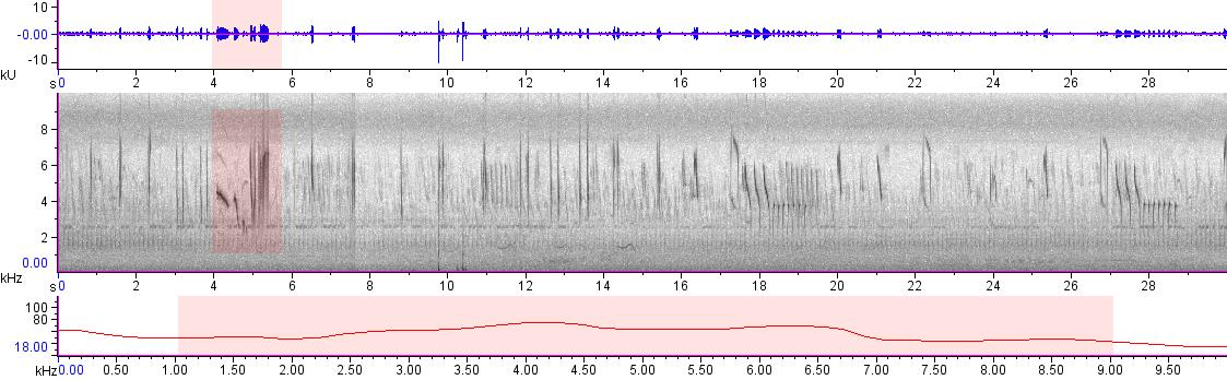 Sonogram of recording #AV 19879