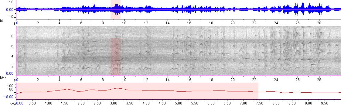 Sonogram of recording #AV 19956