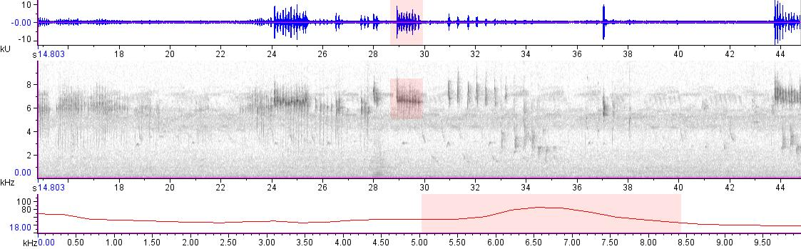 Sonogram of recording #AV 20022
