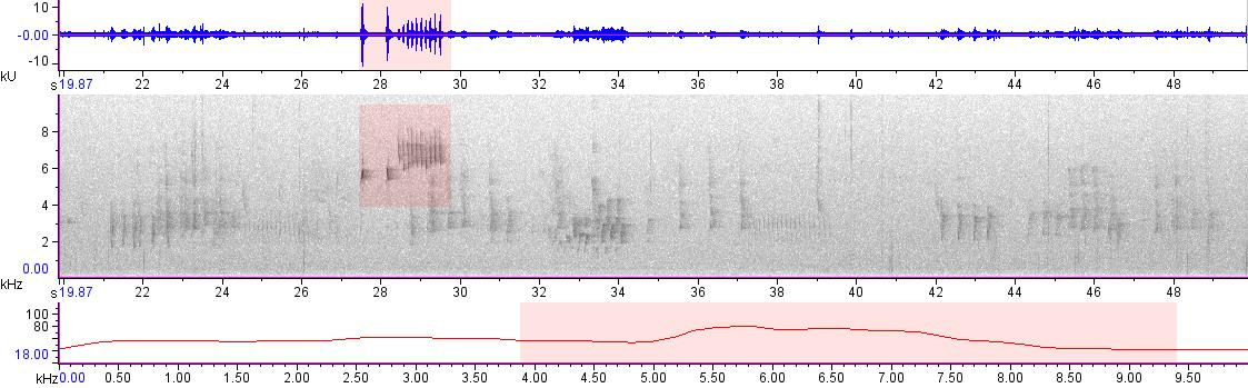 Sonogram of recording #AV 20038