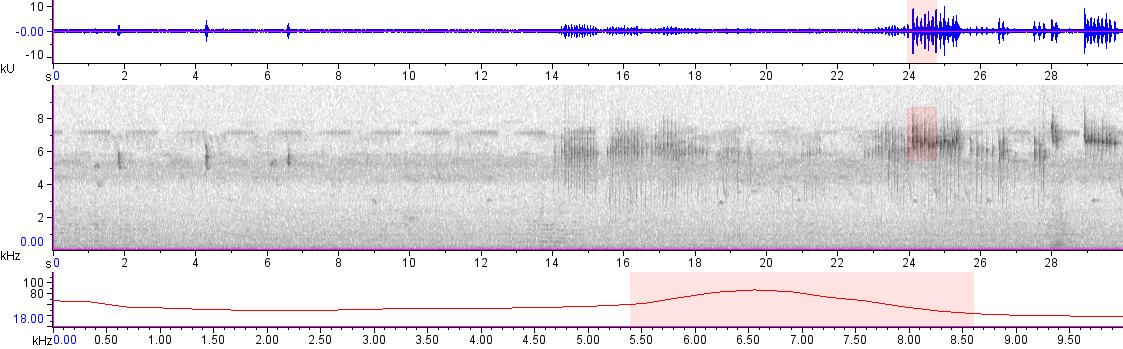 Sonogram of recording #AV 20045