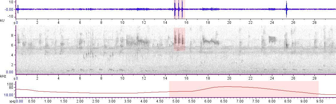 Sonogram of recording #AV 20048